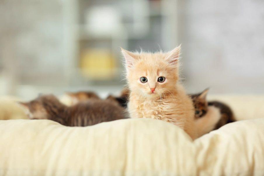 kot w domu