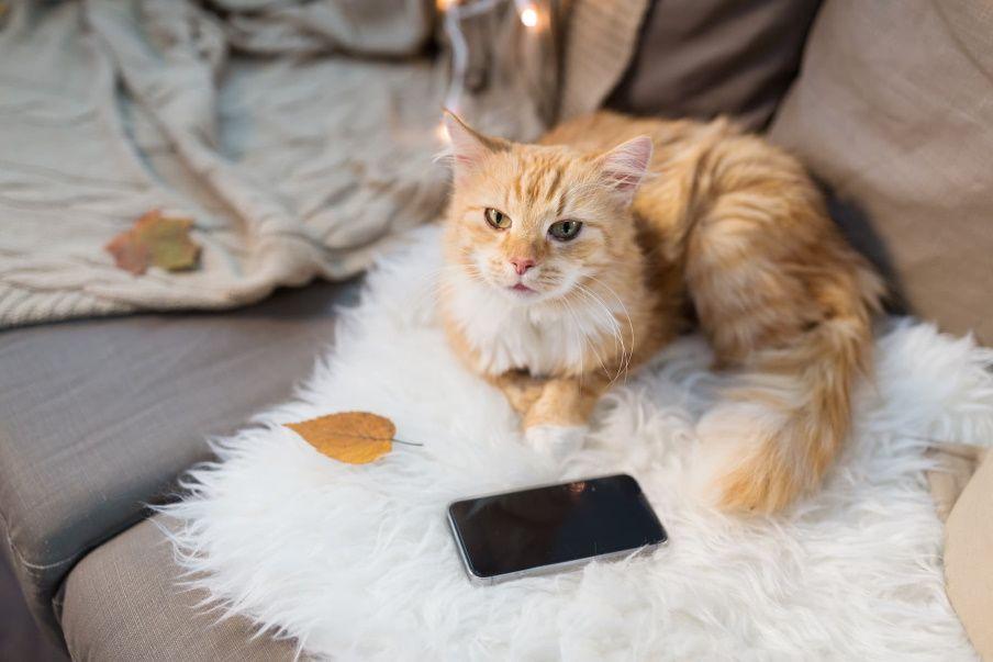 meow talk koci tłumacz